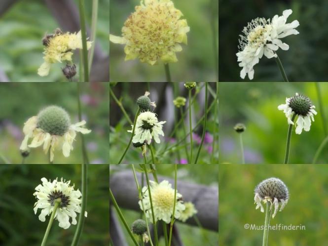 Blume vanille Kopie