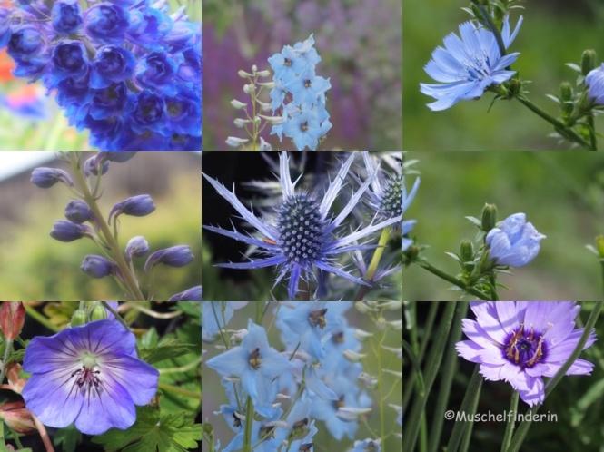 Blumen blau Kopie