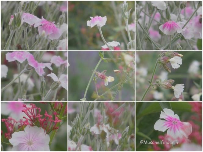 Blumen filigran rosa Kopie