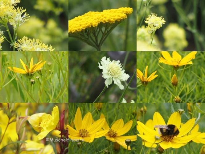 Gelbe Blumen 4